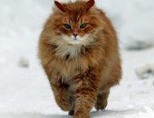 Самые старые коты и кошки в мире