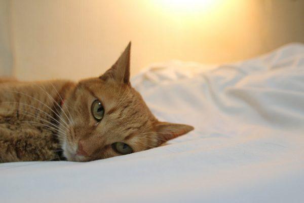 Рыший кот лежит на кровати