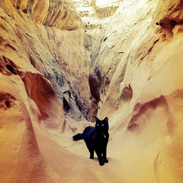 Кошка Милли в каньоне
