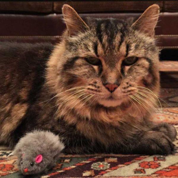 Кот Вельвет отдыхает на коврике