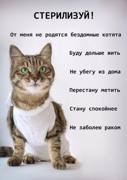 Плюсы стерилизации кошек
