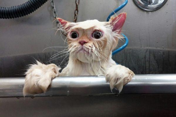 Принудительное купание кошки