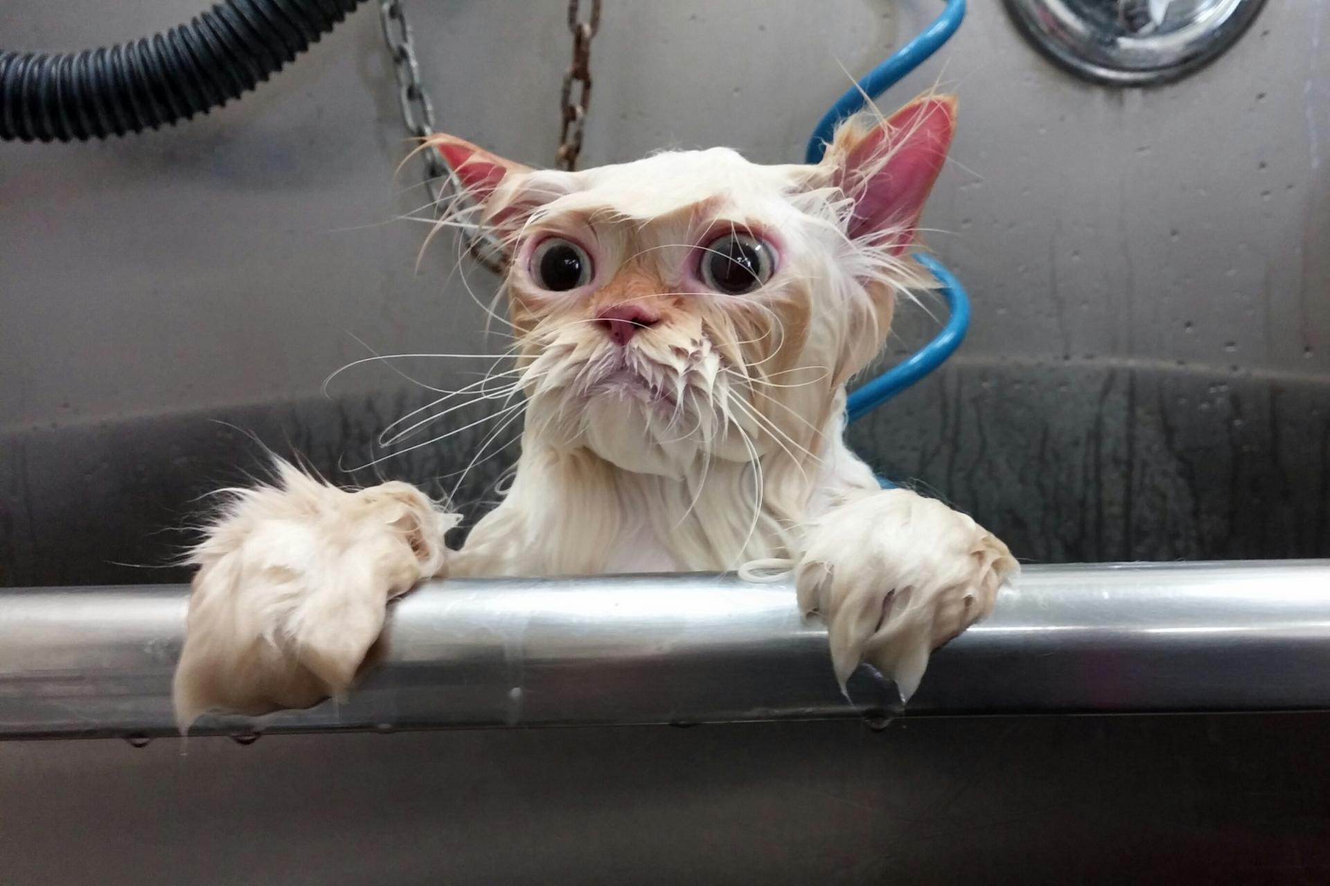 артемиду смешные кошки фото до слез машина времени перенесет