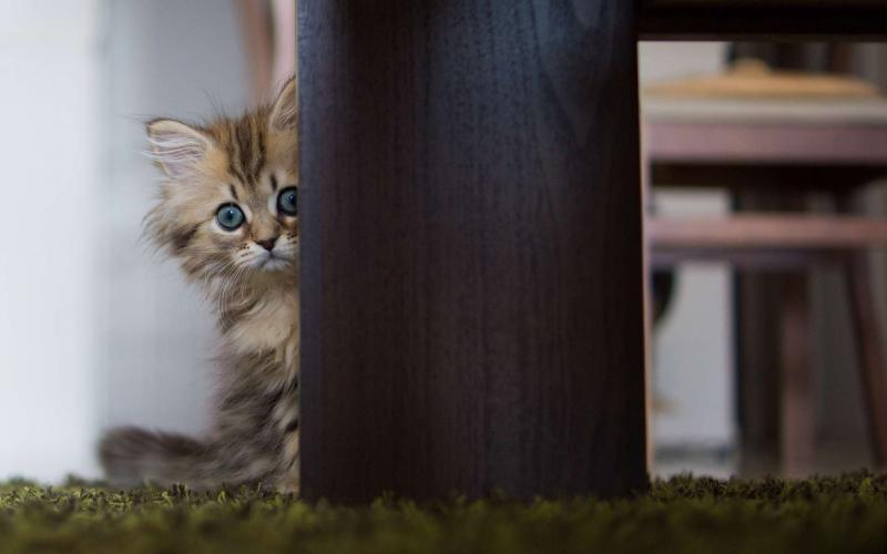 Воспитываем котёнка так, чтобы он не кусался и не царапался