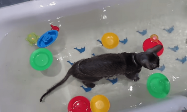 Кошка купается с игрушками