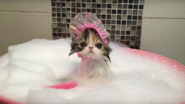 Специальная шапочка для купания на кошке