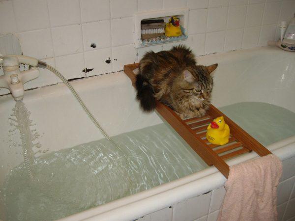 Любимая игрушка кошки
