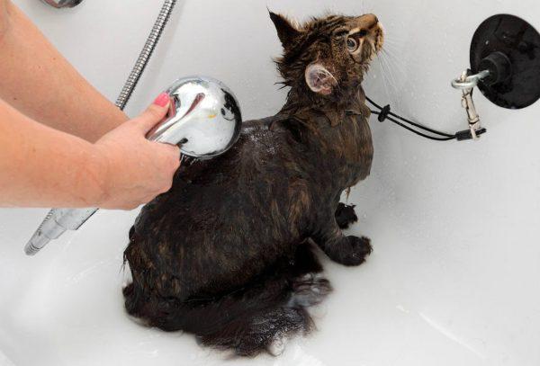 Намочить кота