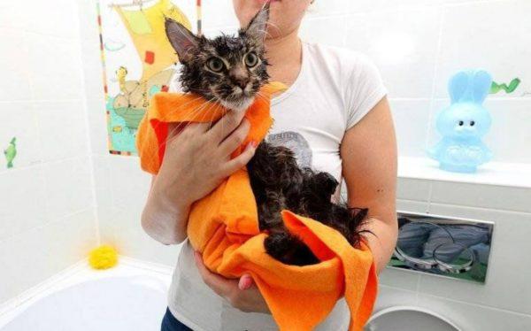Сушка кошки несколькими сухими полотенцами