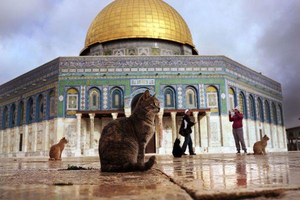 Кошки у мечети