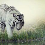 Тигр-альбинос у реки