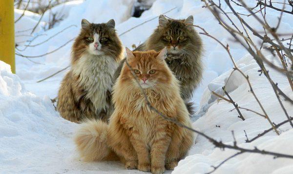 Коты сидят на снегу