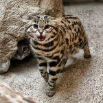 Котята с необычным окрасом