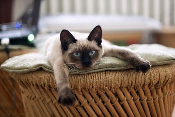 Кошка лежит в корзинке