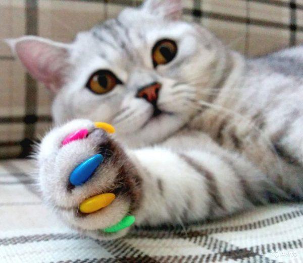 Кот с антицарапками