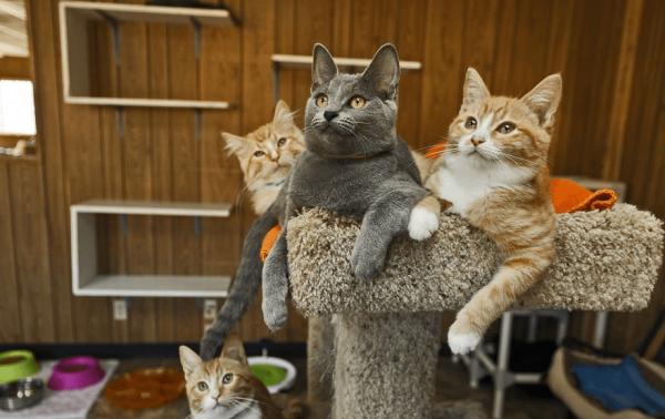 Кошки на лежанке