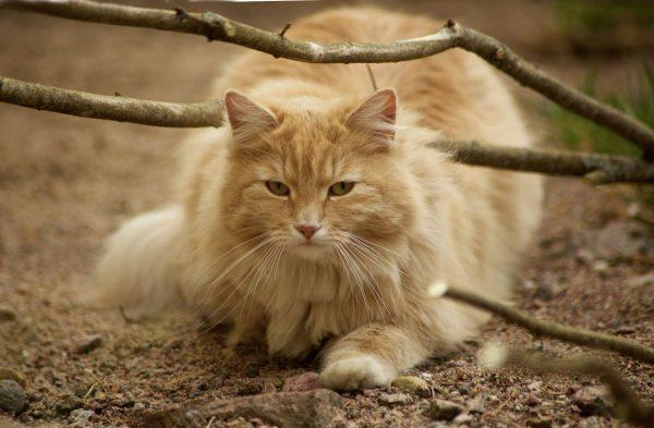 Кот под веткой