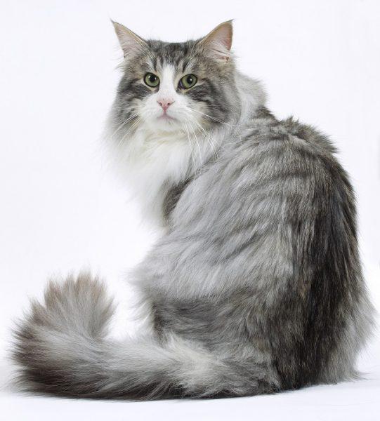 Кошка смотрит назад