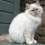 Сидящая кошка