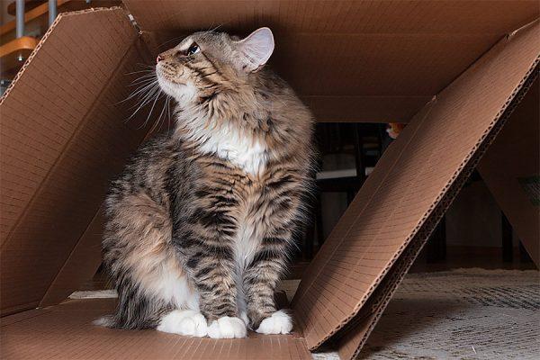 Кот сидит и нюхает коробку