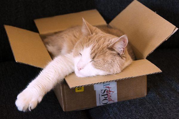 Кот спит в картонной коробке