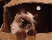 Котёнок в картонной коробке