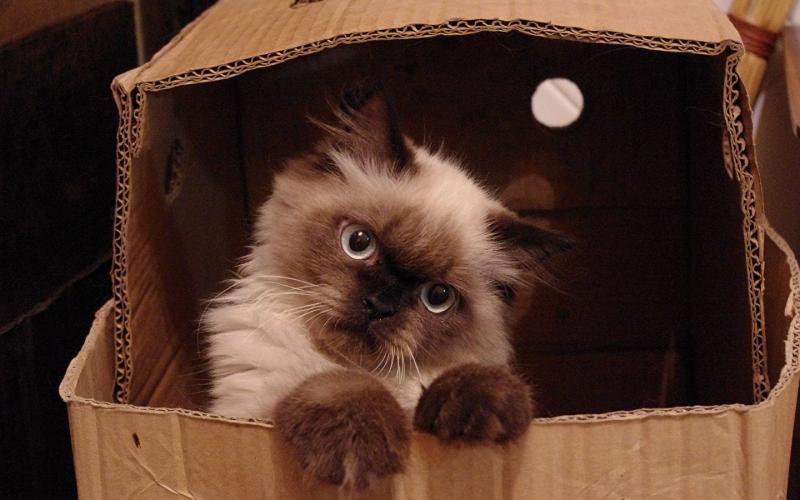 Почему мурлыки любят коробки