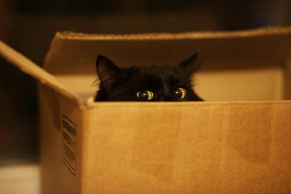 Верхняя часть головы чёрной кошки, выглядывающей из картонной коробки