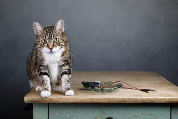 Кошка сидит на столе