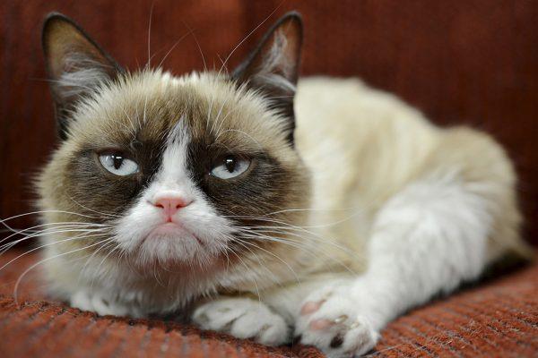 Сердитый кот лежит