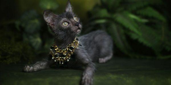 Ликой в ожерелье